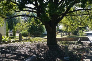 Oakland Cemetery on a Beautiful Day