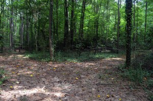 Briarlake Community Forest Alliance